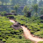 La richesse naturelle de l'Inde à découvrir lors d'un voyage