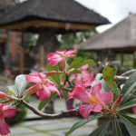 Passer un séjour de bien-être et de découverte en Indonésie